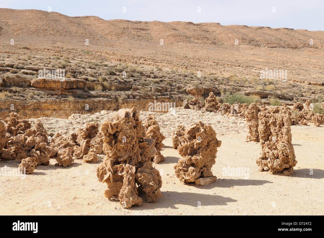 Rosas del desierto en Midas Gorge cerca de Tamerza Túnez Foto de stock