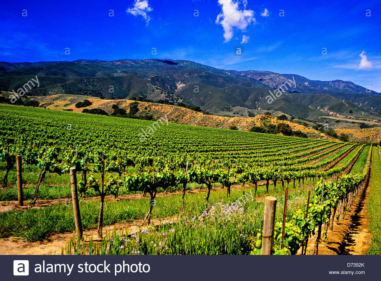 Paraíso de viñedos, el Condado de Monterey, California, EE.UU. Imagen De Stock