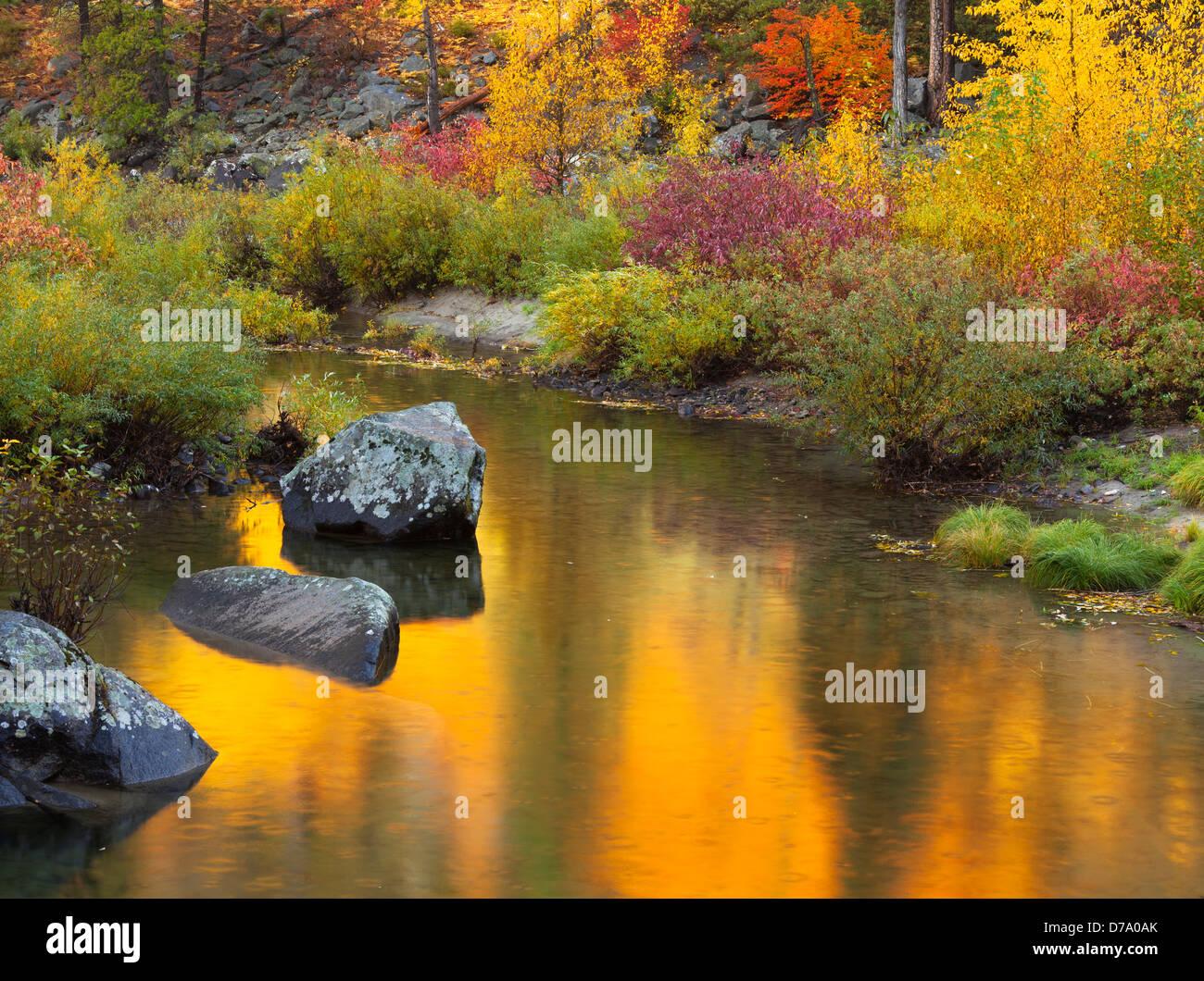 Bosque Nacional Wenatchee, Washington: colores de otoño reflexionando sobre el río Wenatchee en Tumwater Imagen De Stock