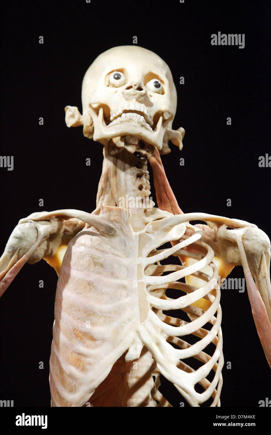 Real Human Bodies Imágenes De Stock & Real Human Bodies Fotos De ...