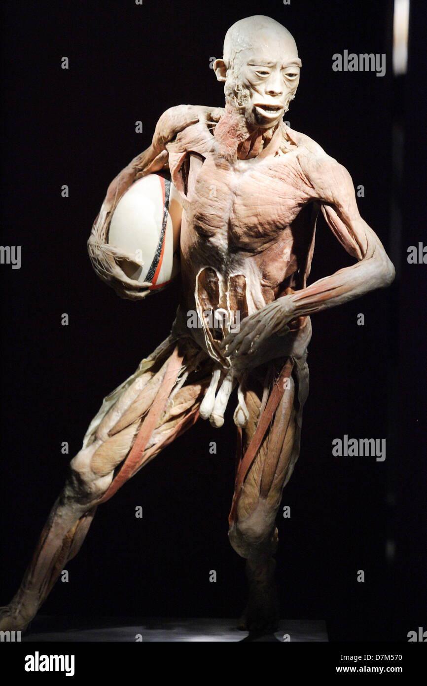 Gdansk, Polonia. 10 de mayo de 2013 El cuerpo humano Exposición en ...
