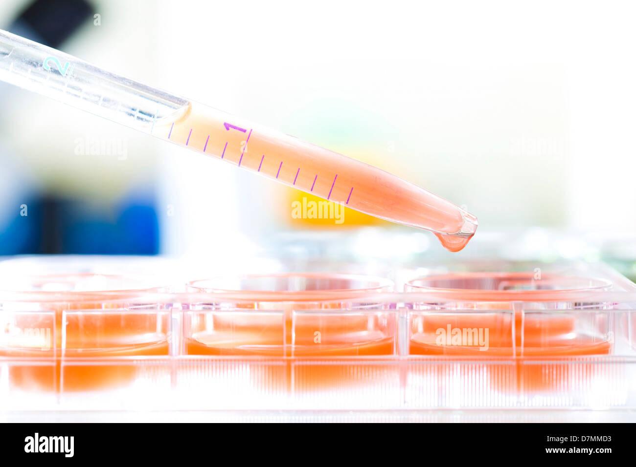 Las investigaciones biológicas Imagen De Stock