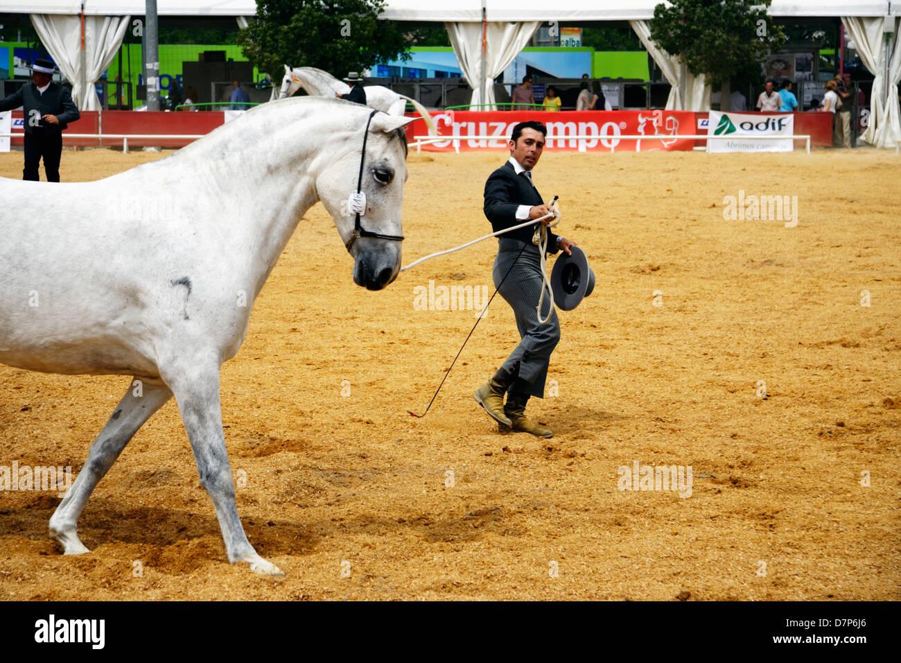 Jinete andaluz exhibiendo su yegua purasangre en la Feria del Caballo de Córdoba. España Imagen De Stock