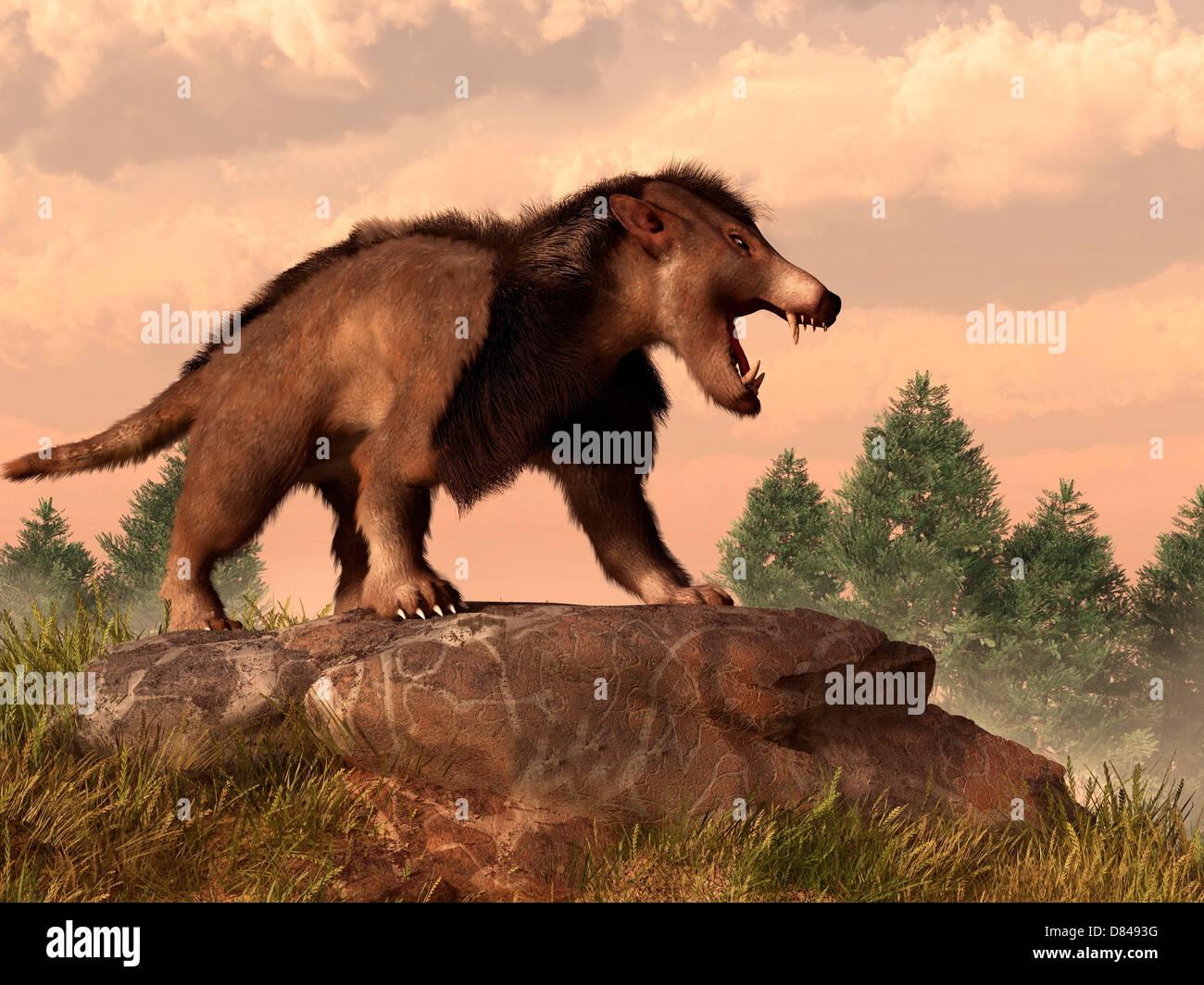 Un Arctocyon sobre una roca. Foto de stock