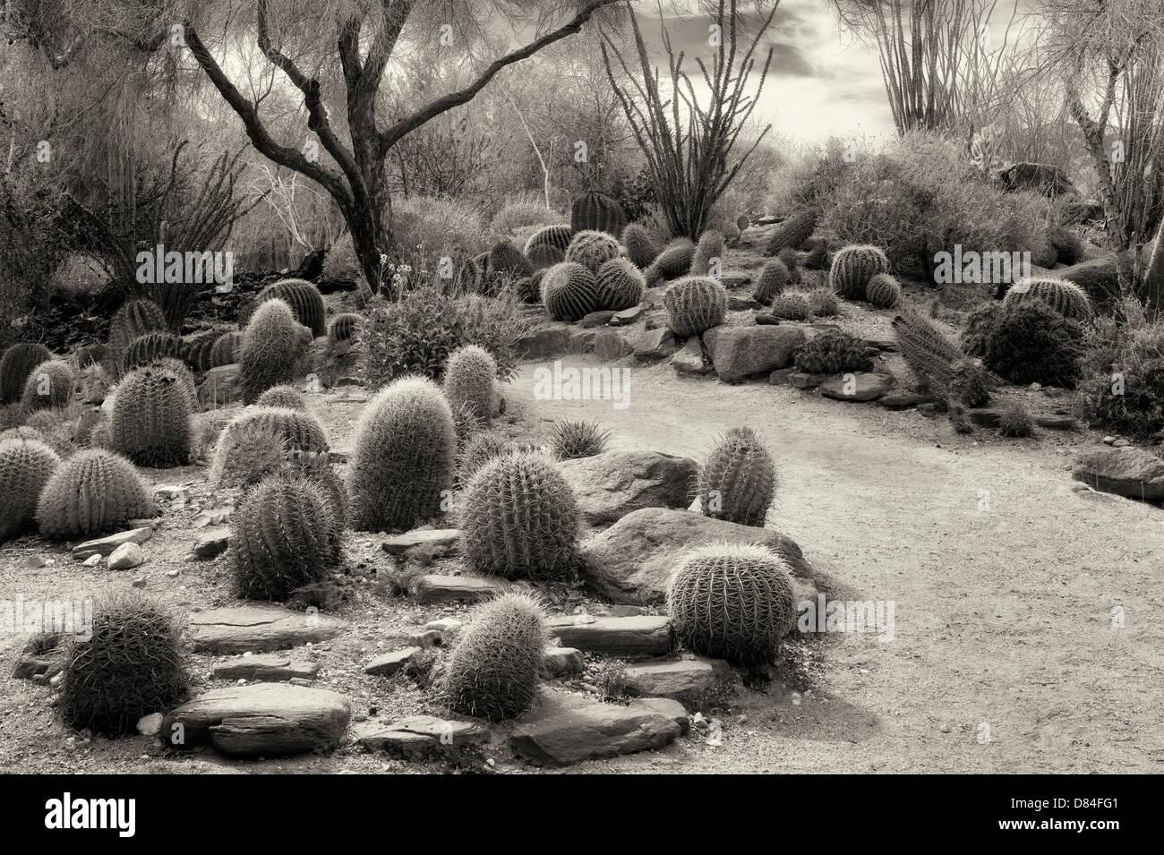 Jardín de Cactus y la ruta. El desierto viviente. Palm Desert, California Imagen De Stock
