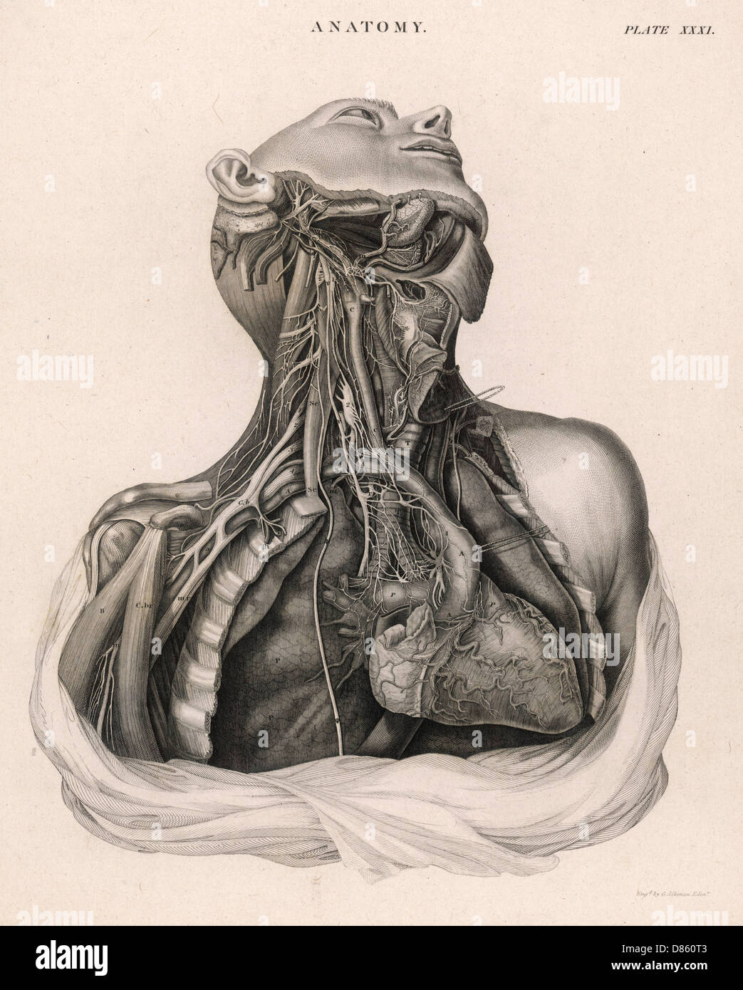 Human Heart Dissection Imágenes De Stock & Human Heart Dissection ...