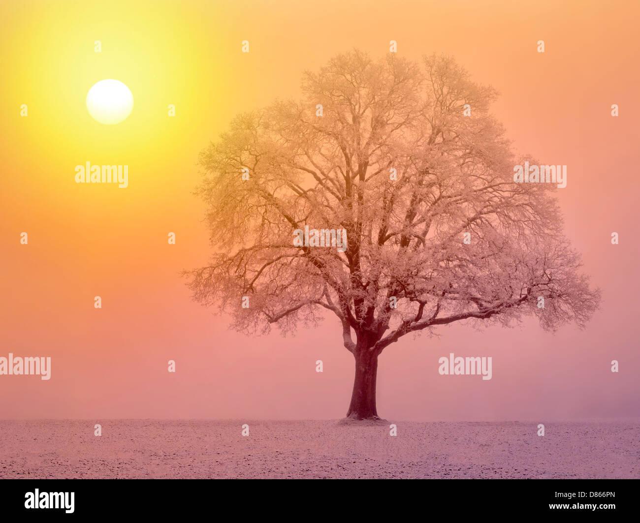 Lone Oak Tree en el campo. Wilsonville, Oregon Imagen De Stock