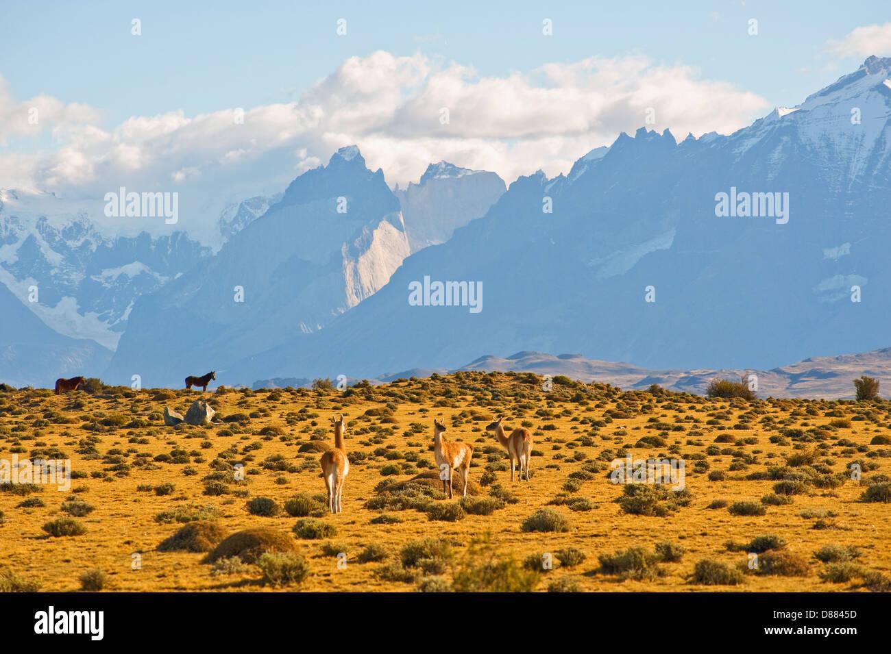 Parque Nacional Torres del Paine, Chile Imagen De Stock
