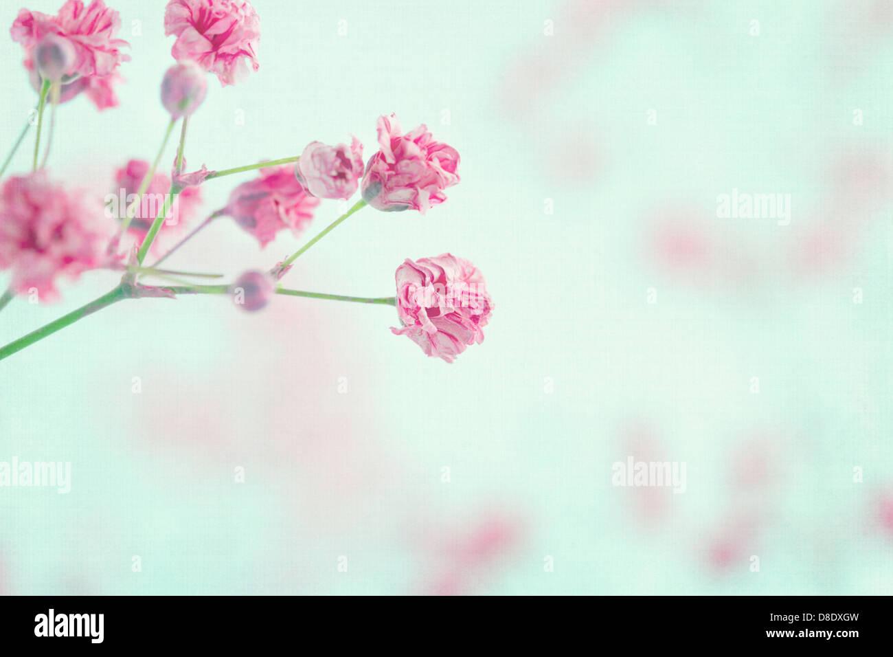 La Respiración Del Bebé Rosa Flores En Azul Pastel