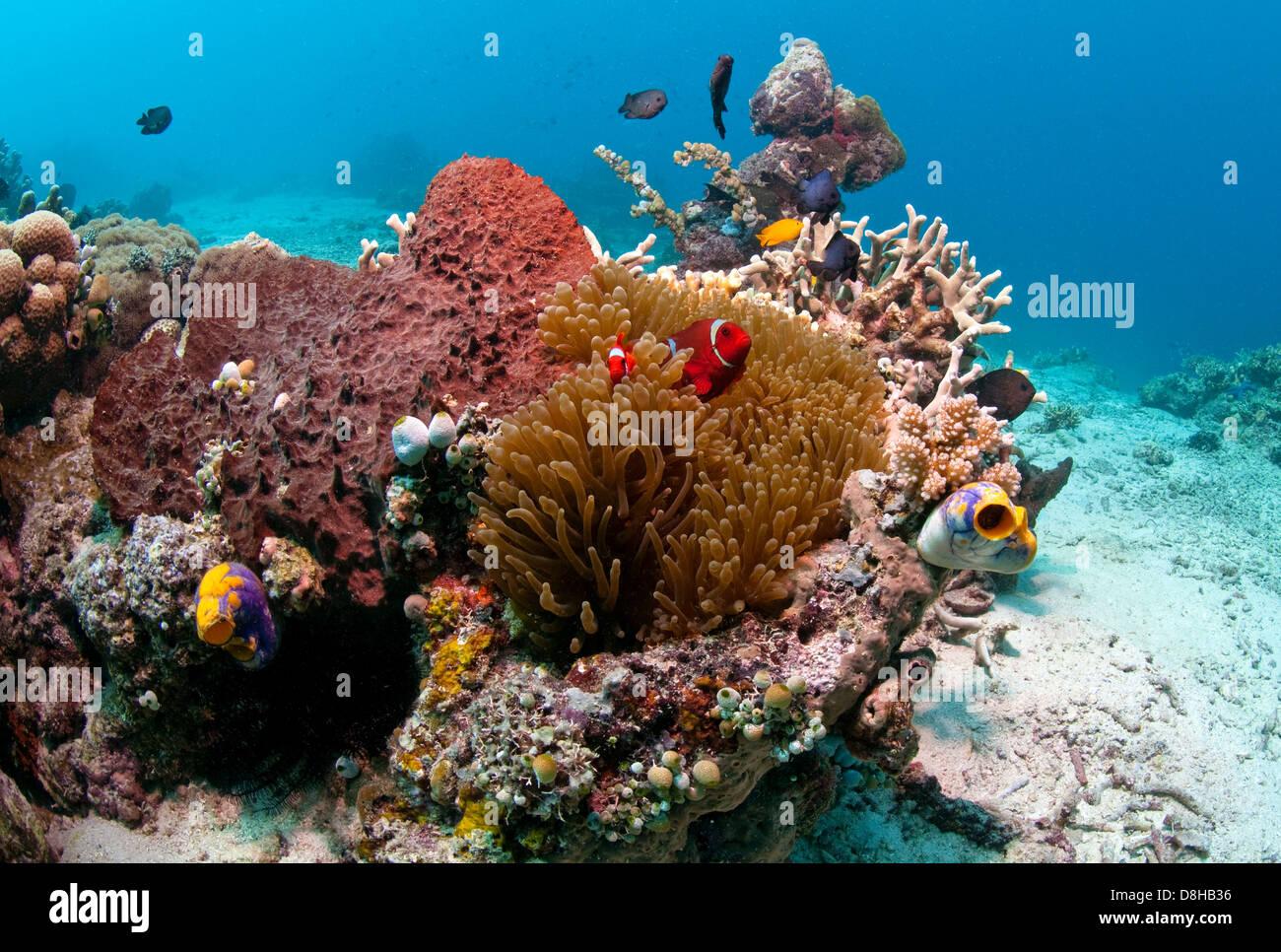 arrecife de coral Foto de stock