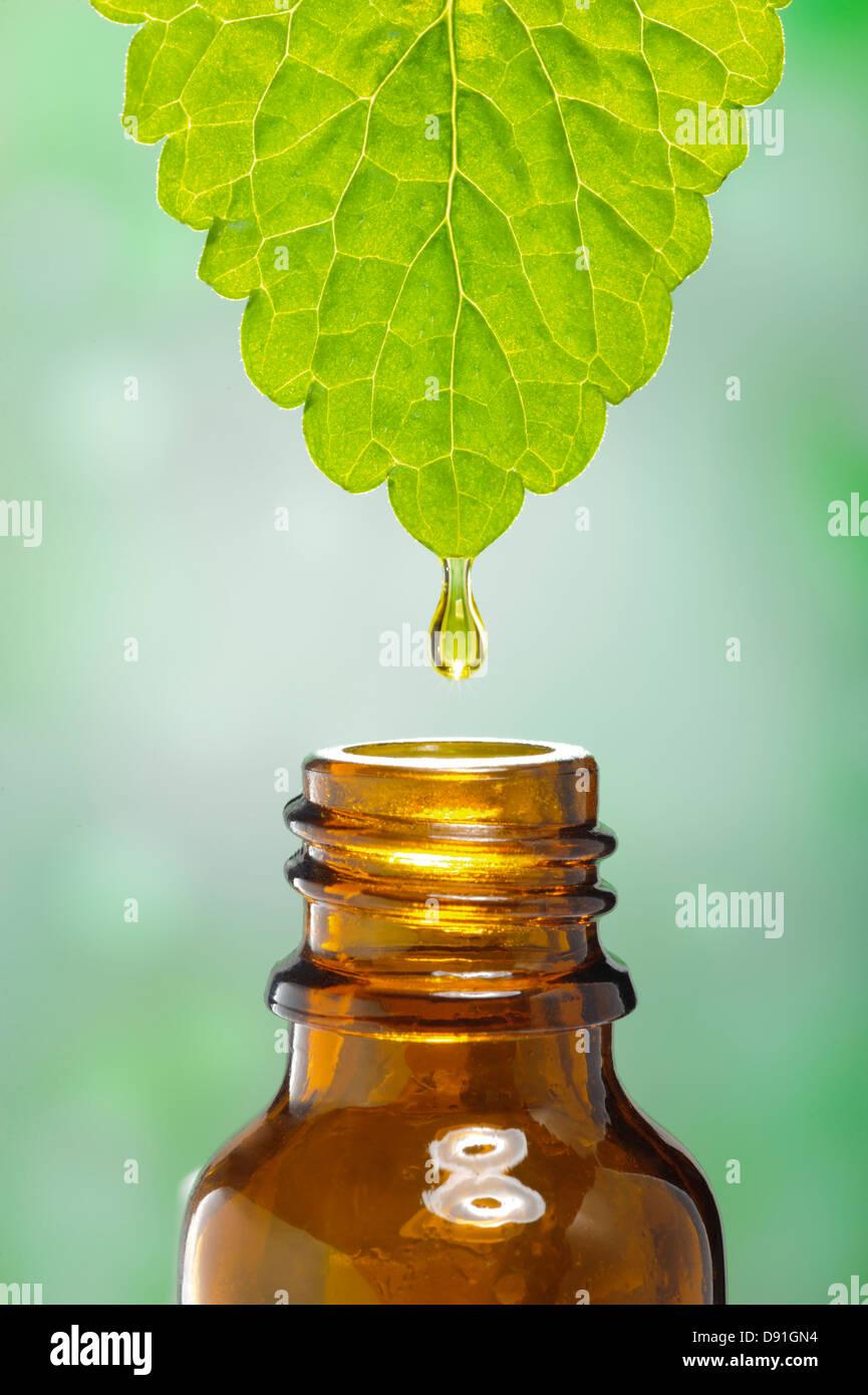 El líquido desciende desde la hoja como símbolo de la medicina herbaria alternativo Imagen De Stock