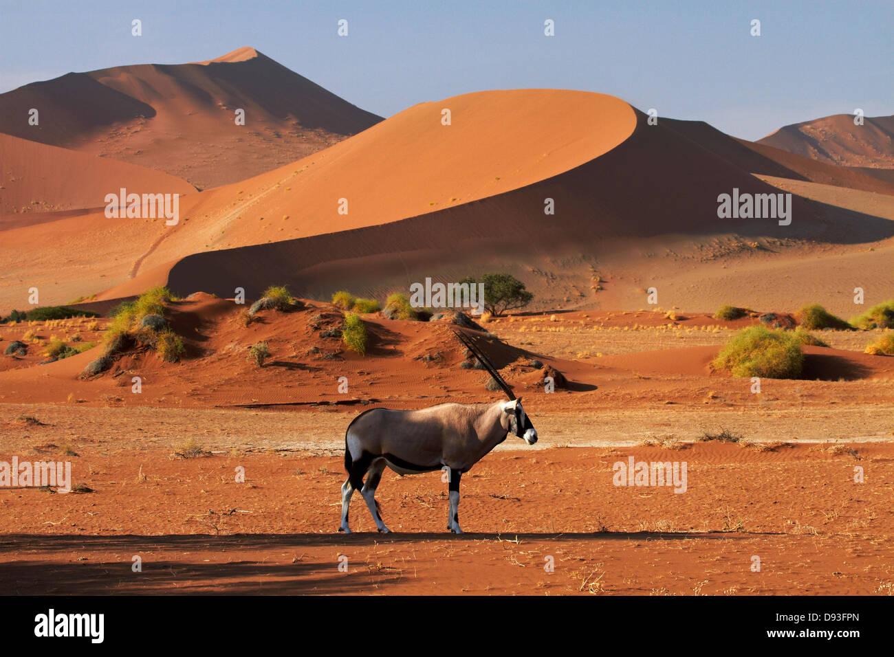Gemsbok (Oryx) y dunas de arena, el Parque Nacional Namib-Naukluft, Namibia, África Imagen De Stock
