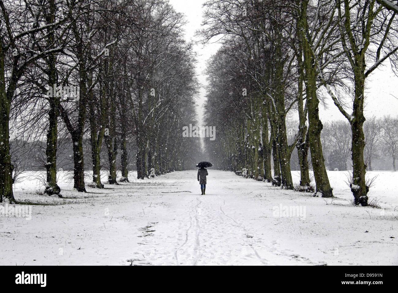 Nieve, nieve escena de persona caminando por avenida arbolada en día de nieve, Foto de stock