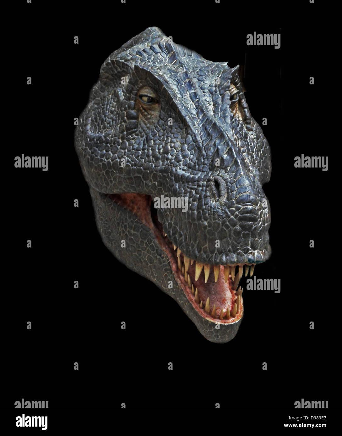 Reconstrucción de la cabeza del Cretácico tardío dinosaurio Tyrannosaurus rex Imagen De Stock