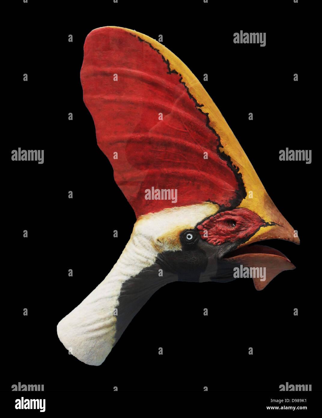 Restauración de la cabeza del Cretácico Inferior 'pterosaur Tapejara'. Los adultos tienen una Imagen De Stock