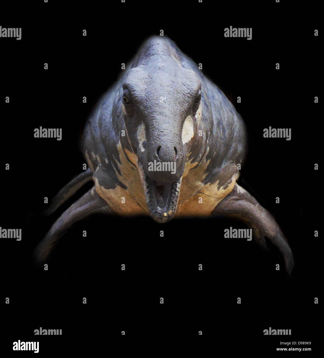 Tamaño de la vida reconstrucción de los reptiles marinos del Jurásico Inferior Cryptoclidus Imagen De Stock