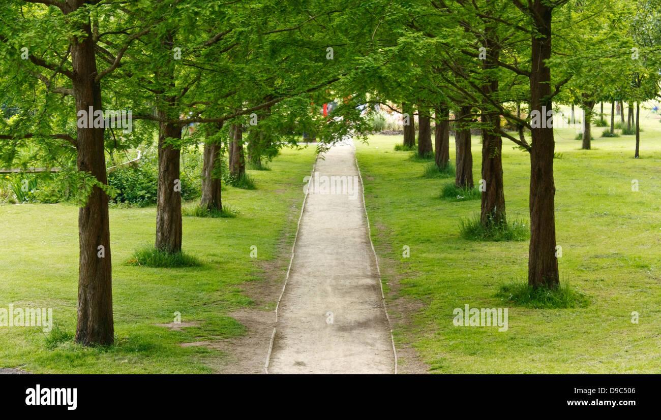 Ruta o avenida arbolada que desaparece en la distancia en un área de recreo o parque urbano Imagen De Stock