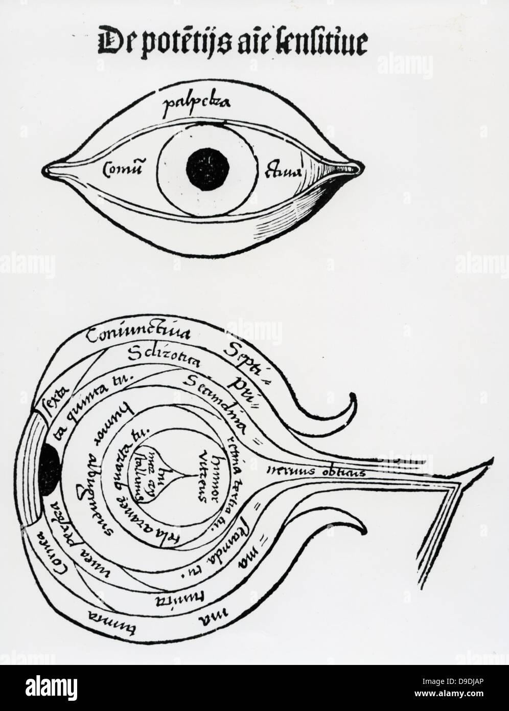 diagrama del ojo humano  xilograf�a de ''margarita philosophica