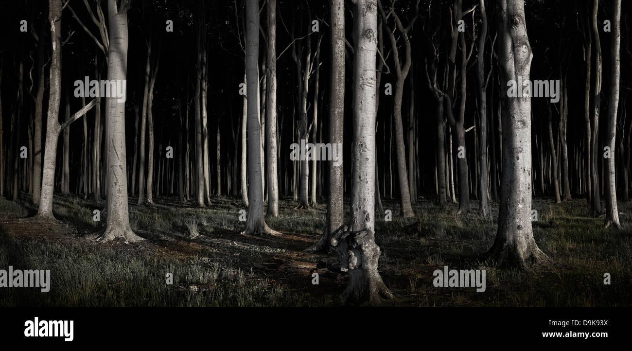Vista panorámica de la Haunted Woods en Ostseebad Nienhagen Imagen De Stock
