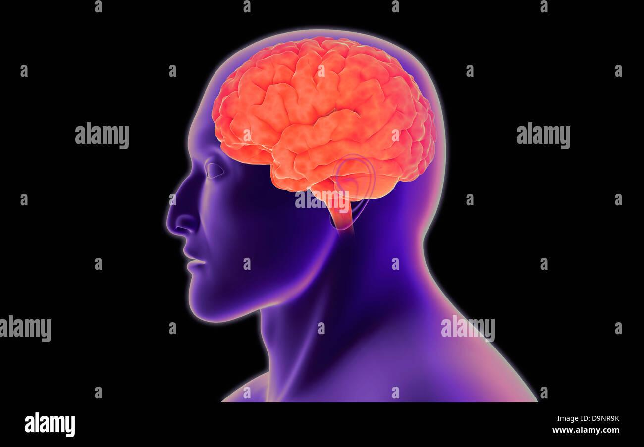 Imagen conceptual del cerebro humano. Foto de stock