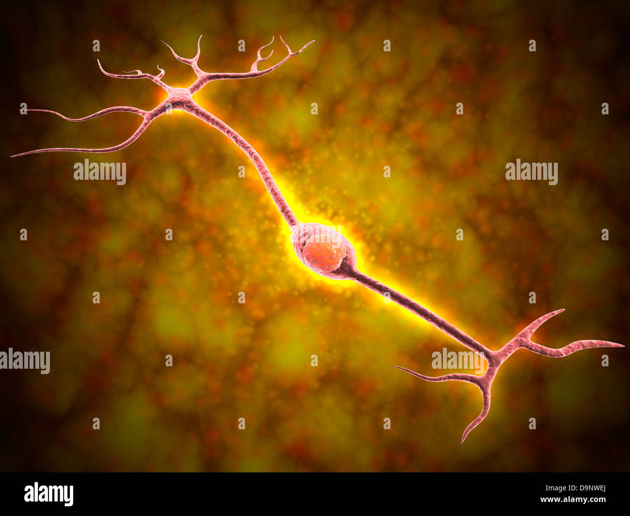 Vista microscópica de una neurona bipolar Imagen De Stock