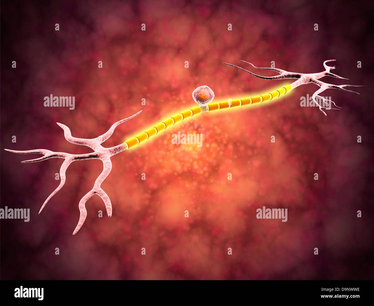 Vista microscópica de una neurona unipolar. Imagen De Stock