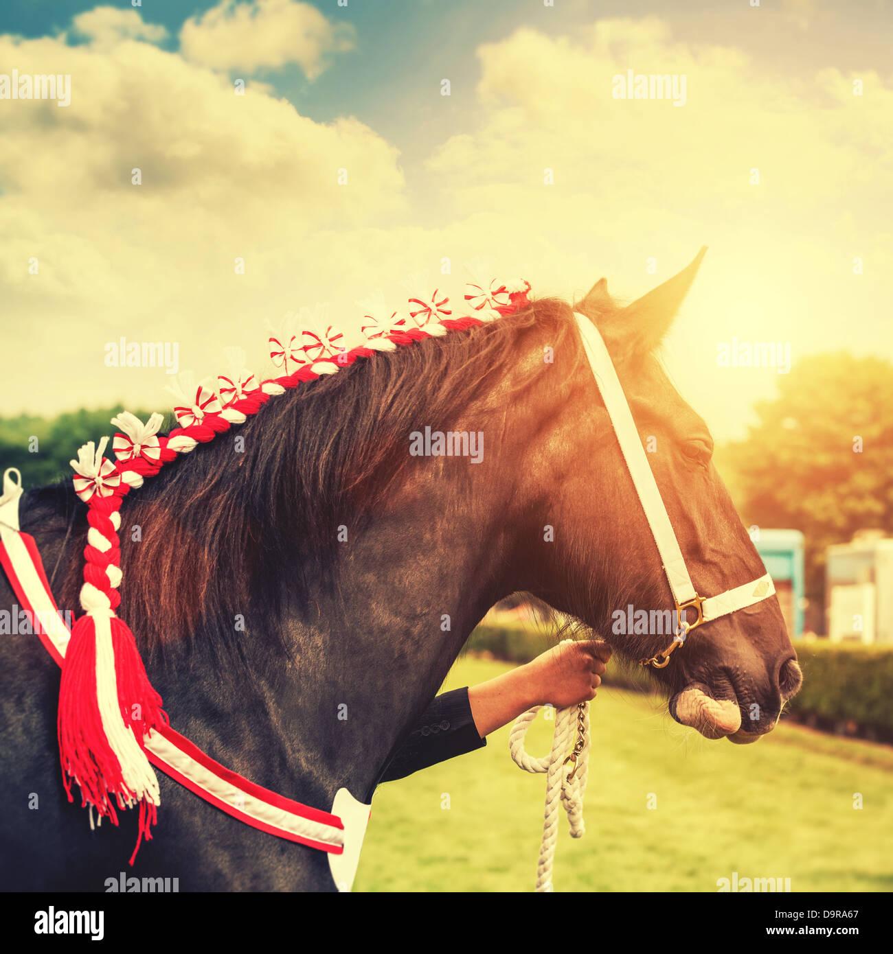 espectáculo de caballos Imagen De Stock