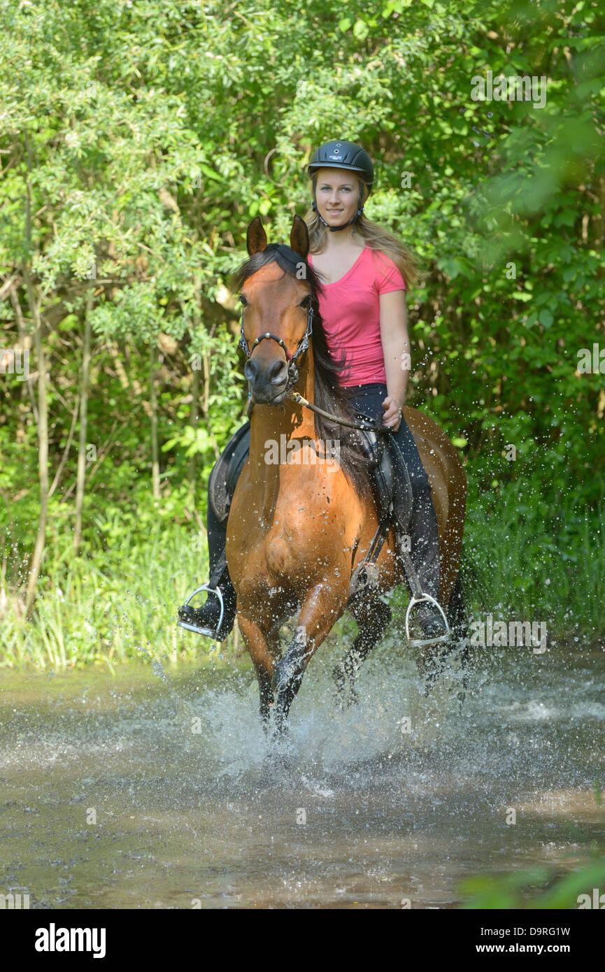 Joven Jinete en la espalda de un Caballo de Paso Fino en un pequeño río Imagen De Stock