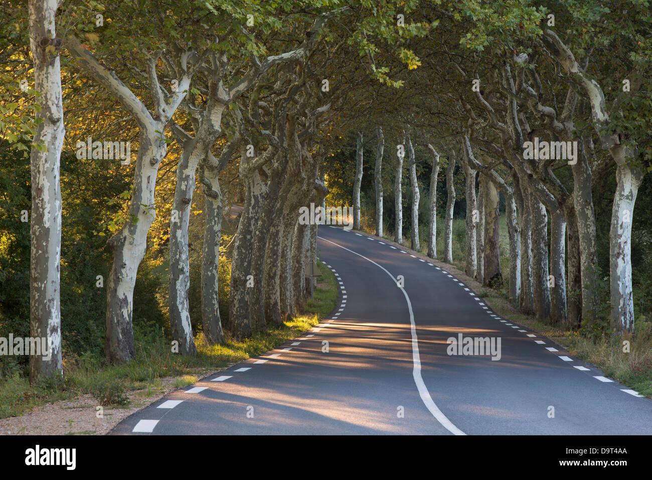 Una avenida de árboles normal en una carretera nr Soreze, Tarn, Languedoc, Francia Imagen De Stock