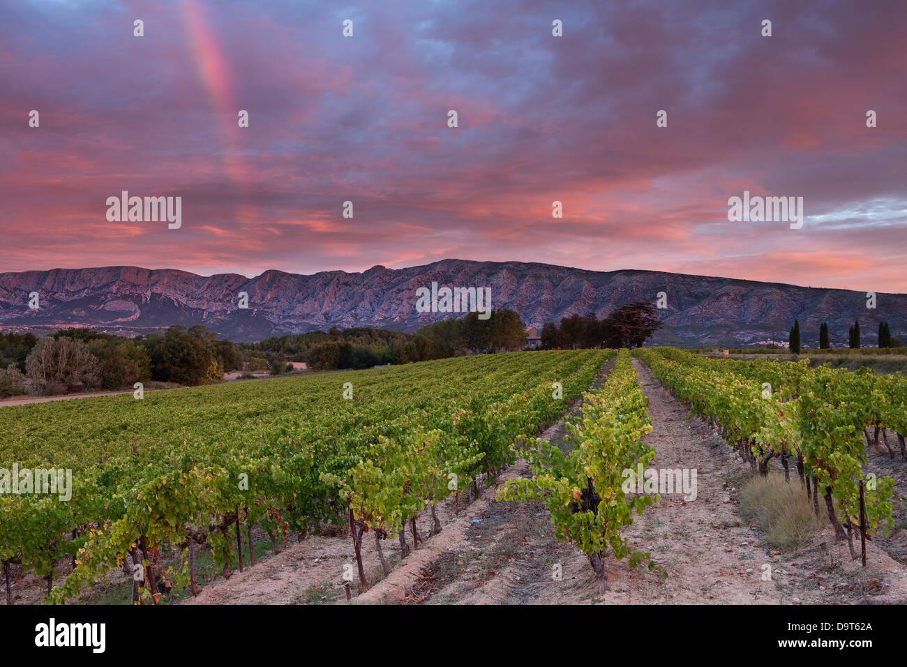 Viticulture Im 225 Genes De Stock Amp Viticulture Fotos De Stock