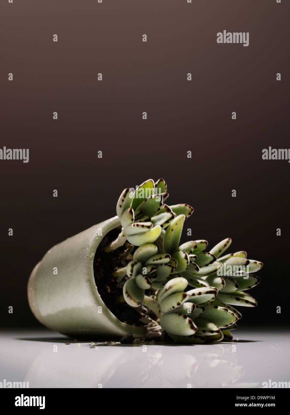 Planta Imagen De Stock