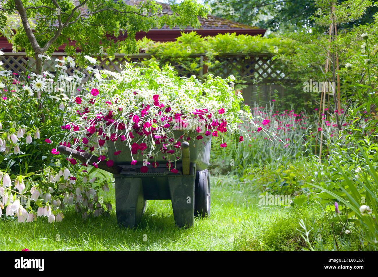 Carretilla de mano lleno de flores en el jardín Foto de stock