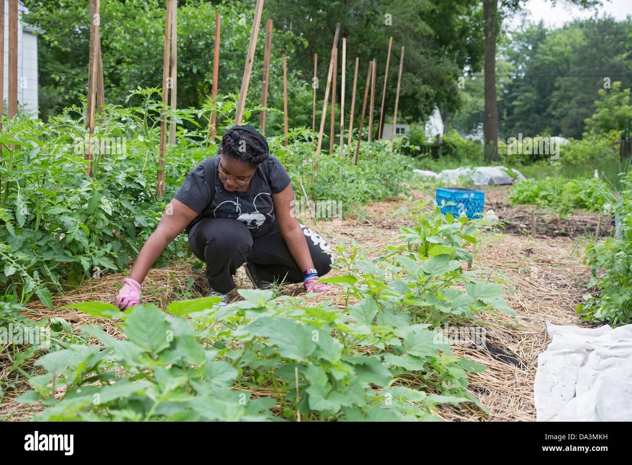 Un estudiante universitario trabaja como pasante en un jardín comunitario en Brightmoor, uno de los barrios Imagen De Stock