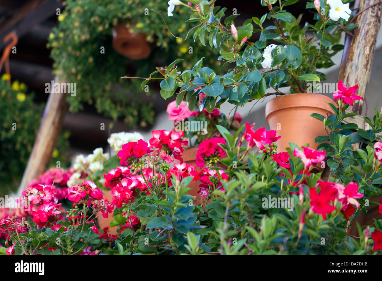 Flores en un balcón Imagen De Stock
