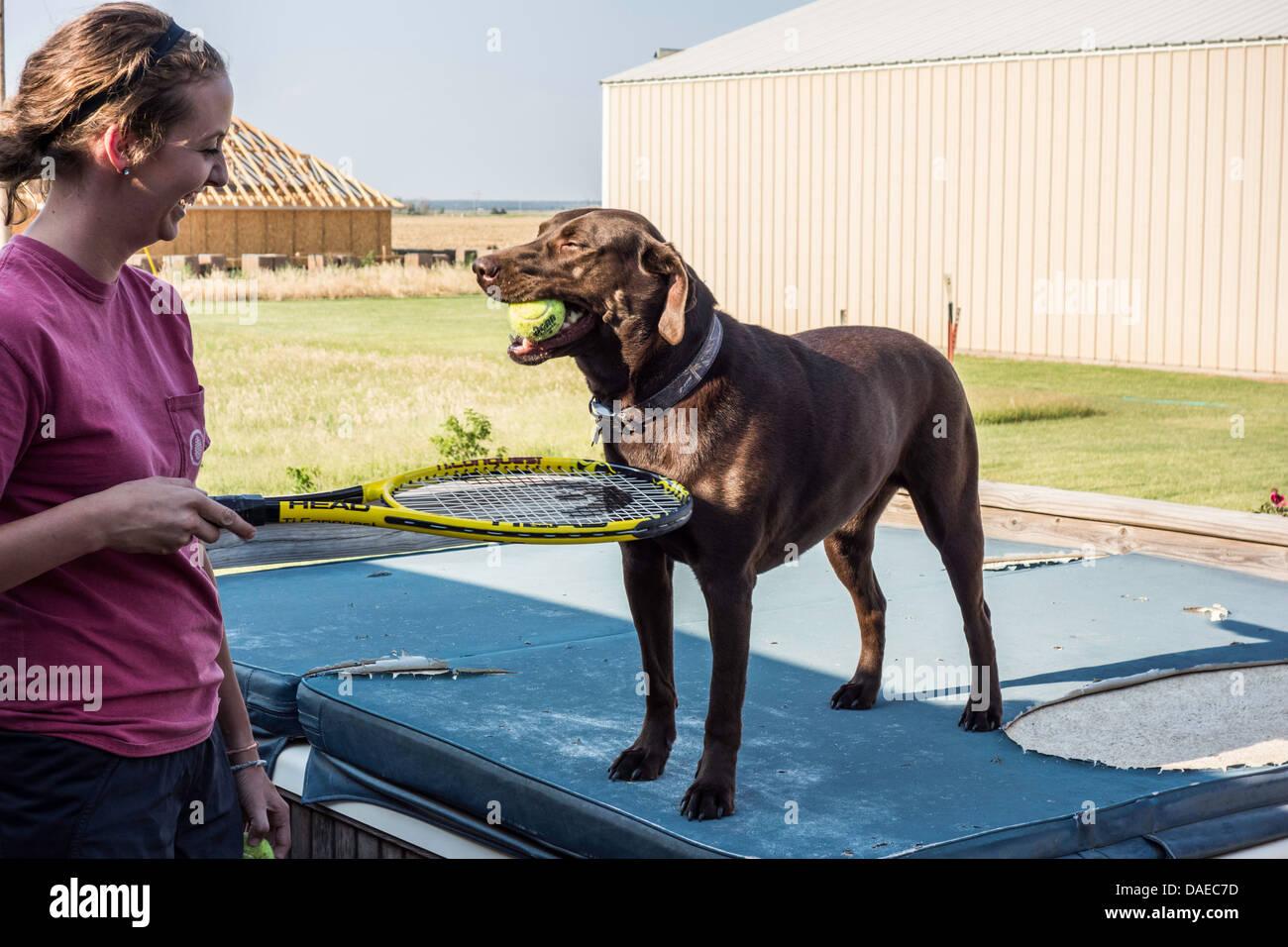Un perro Labrador Retriever chocolate tiene una pelota de tenis en su boca mientras jugando a la pelota con un joven adulto. Ee.Uu.. Foto de stock