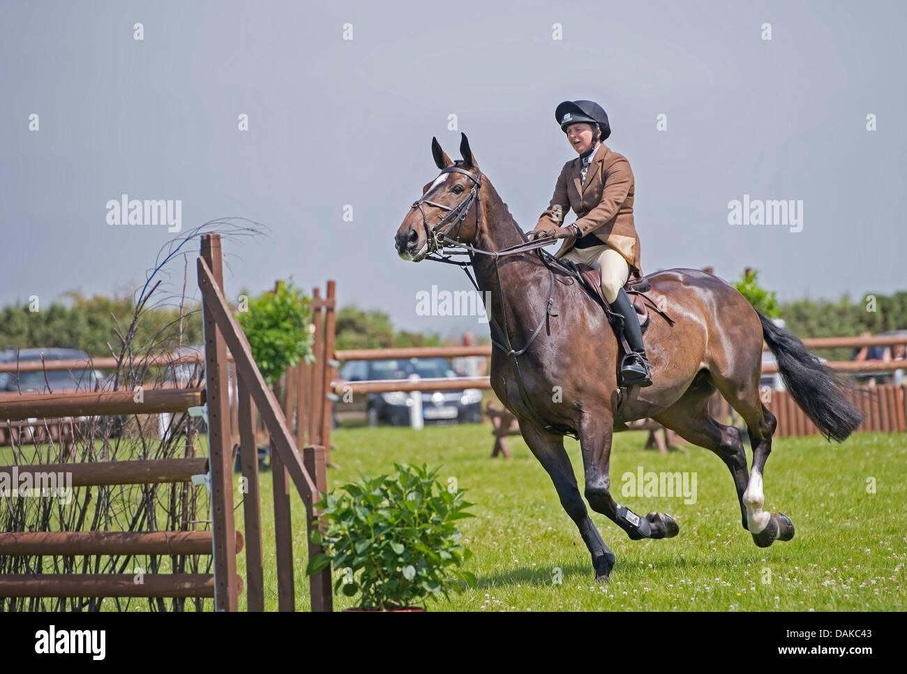 Stithians, Reino Unido. El 15 de julio, 2013. Enfoques de caballos la valla durante el concurso hípico en la Imagen De Stock