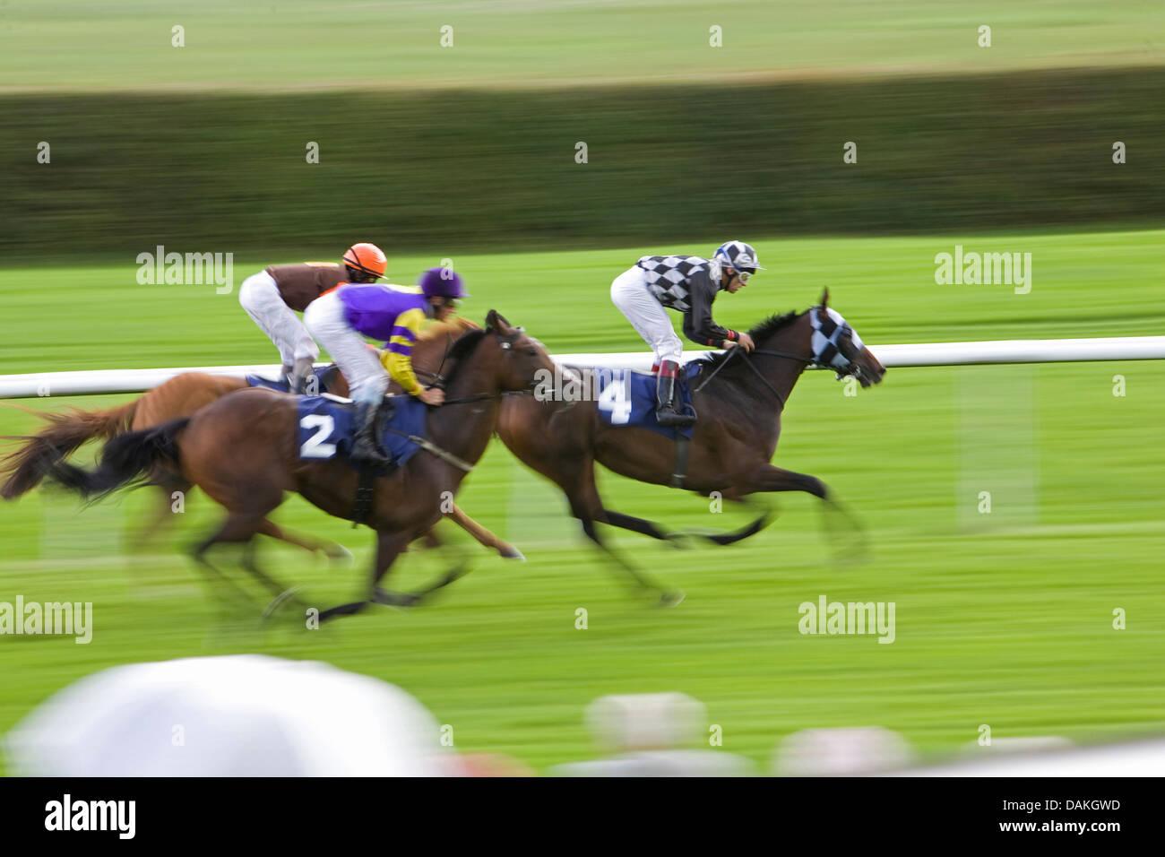 Caballo doméstico (Equus caballus przewalskii. f), carreras de caballos Imagen De Stock