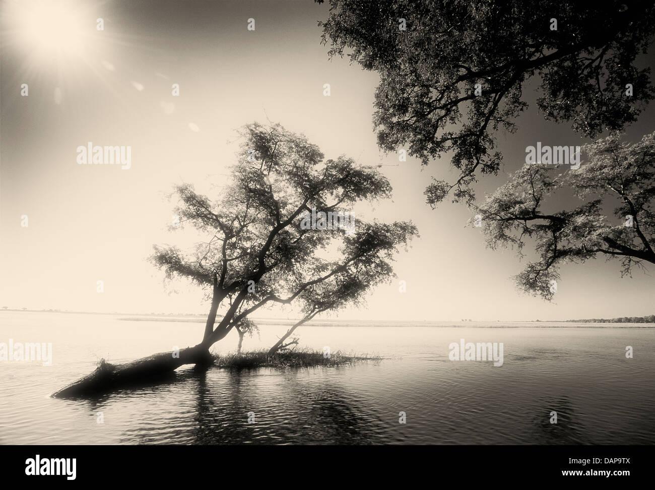 Una escena con retroiluminación B/W en el río Chobe inundadas. Imagen De Stock