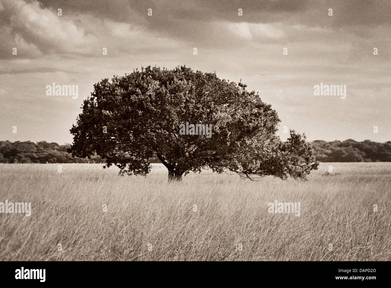 Fotografía en B/N de un árbol en el lago Xingute, reducir la profundidad de campo, la Reserva Especial Imagen De Stock