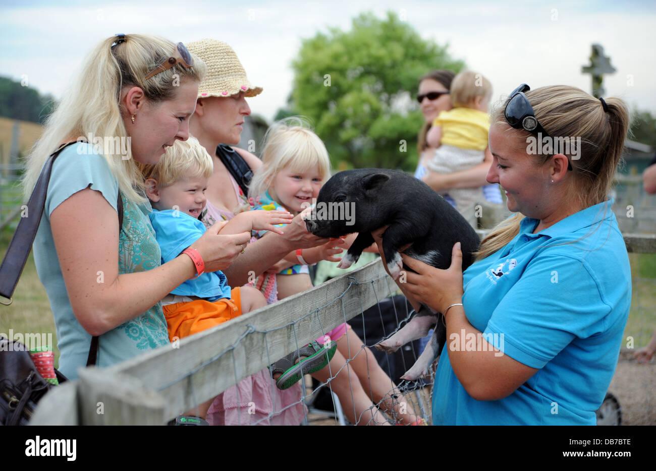 Las familias que visitan el muelle Barn Farm en Lewes con cerdos vietnamitas en miniatura olla curva UK Imagen De Stock