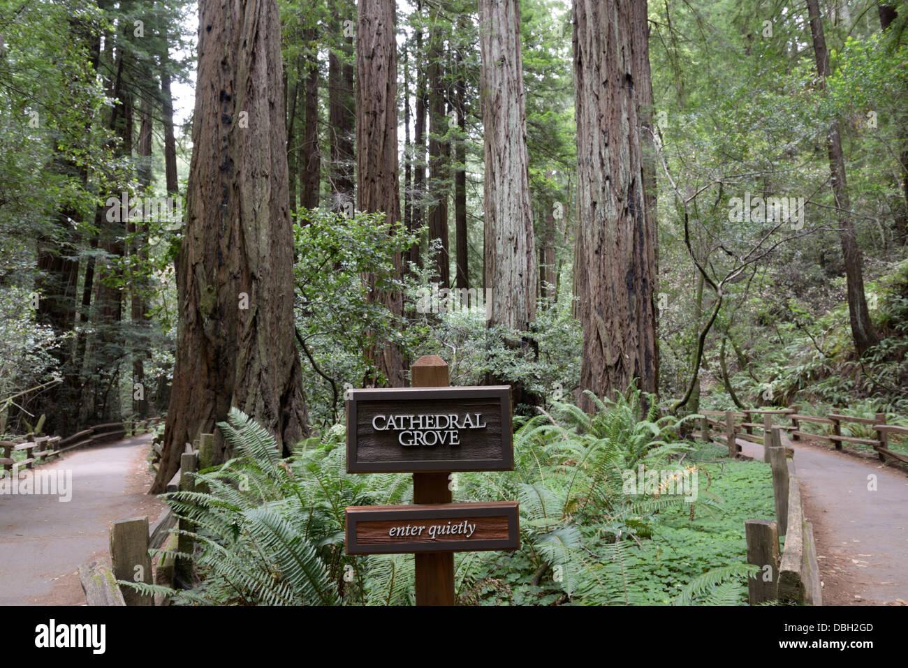 Camino a través de la Catedral Grove de Costa Redwoods, Sequoia sempervirens, Monumento Nacional Muir Woods Foto de stock