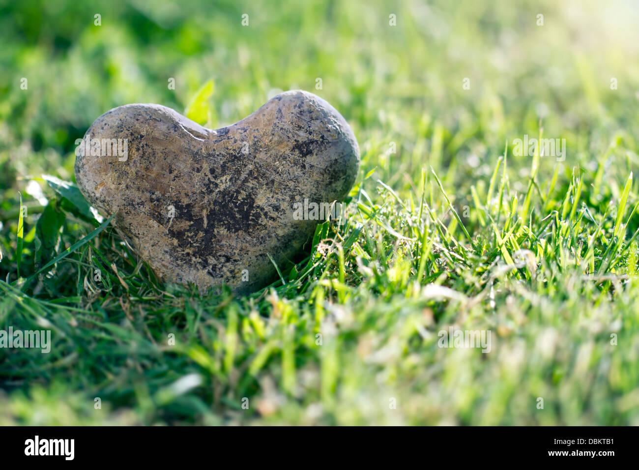 Piedra en forma de corazón en el pasto verde con la luz dorada del sol y espacio de copia Imagen De Stock