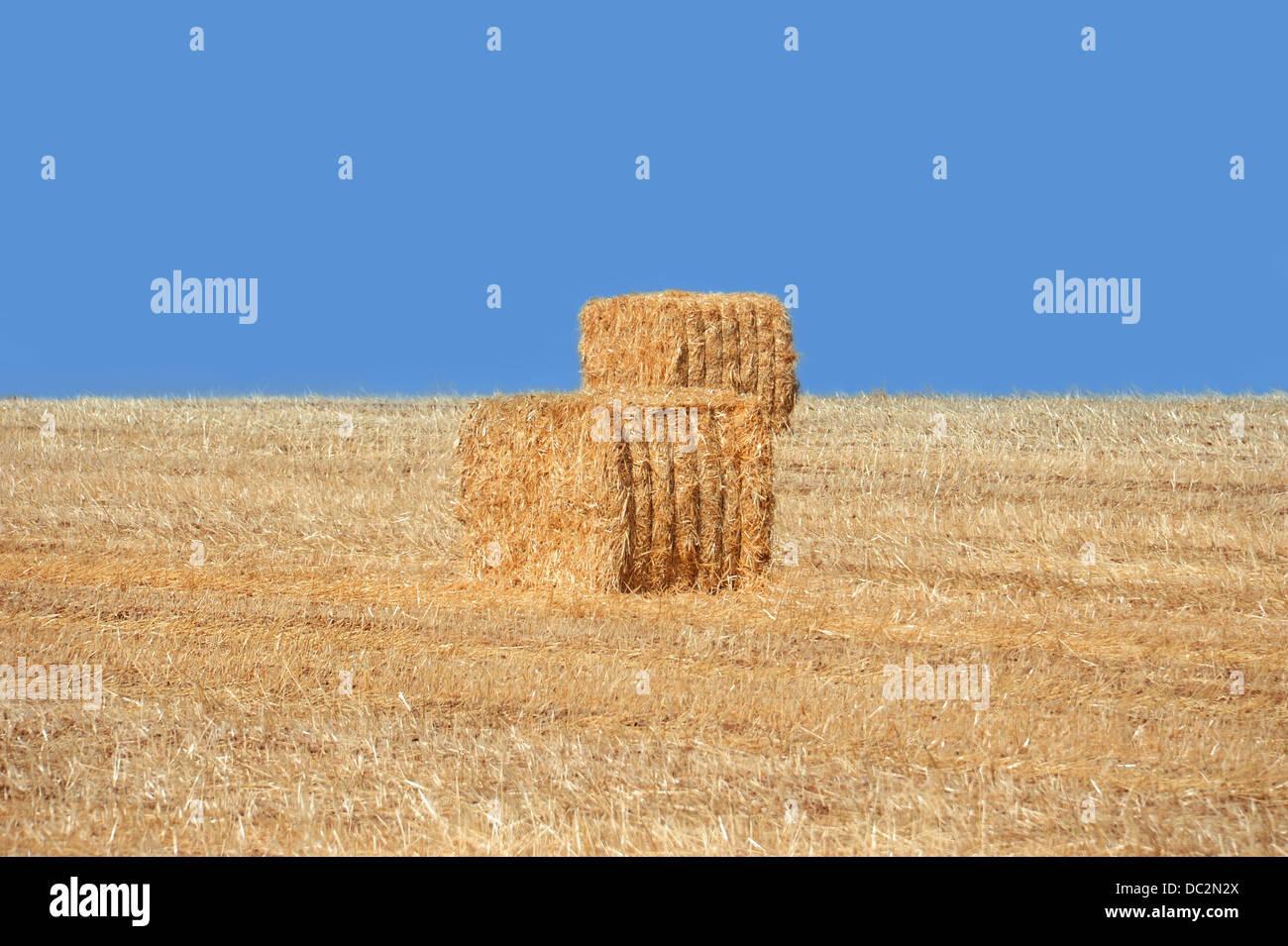 Pajar de oro y azul cielo sin nubes Imagen De Stock