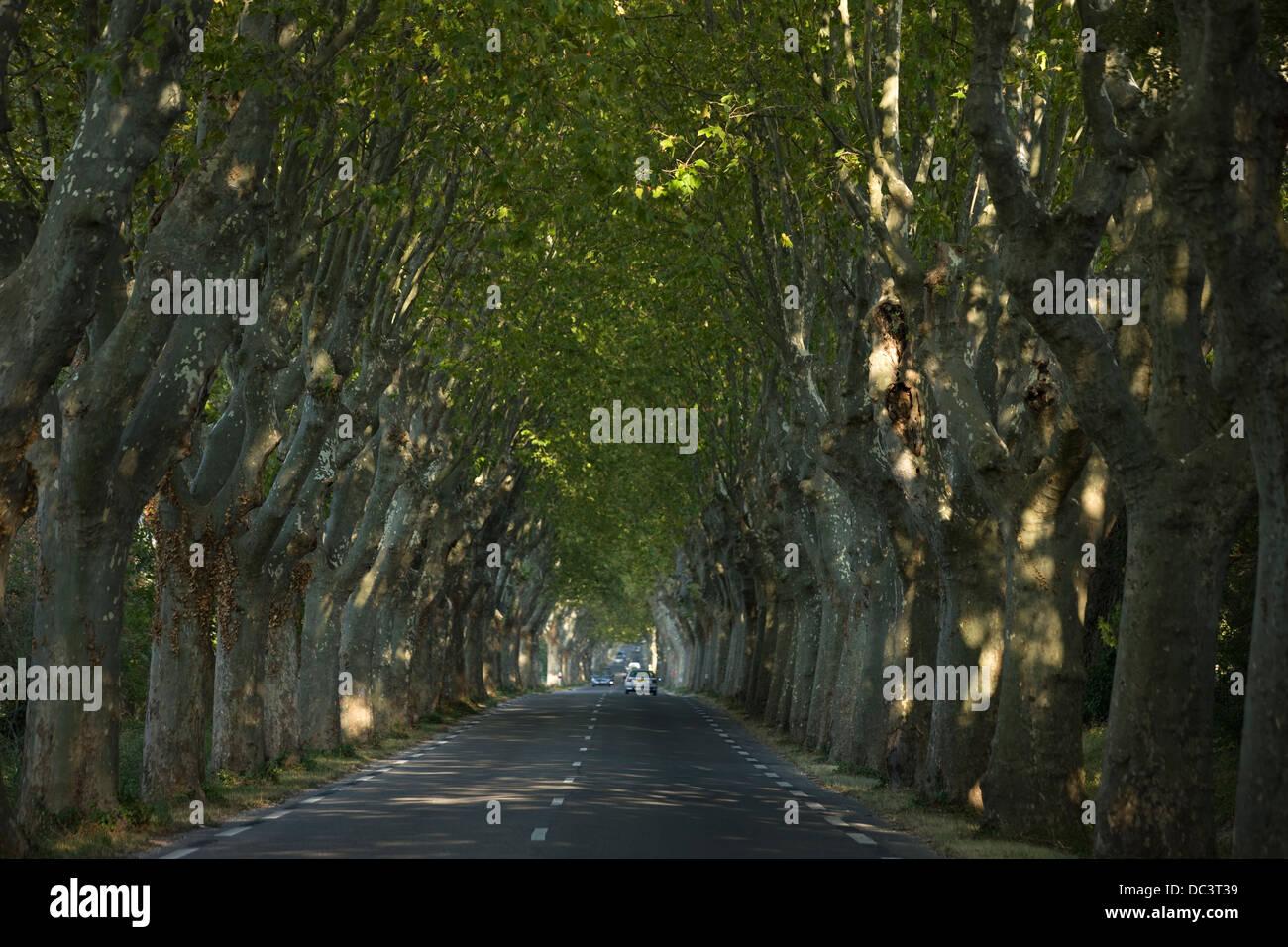 La ruta D99 Sycamore arbolada calle SAINT REMY DE PROVENCE FRANCIA Foto de stock