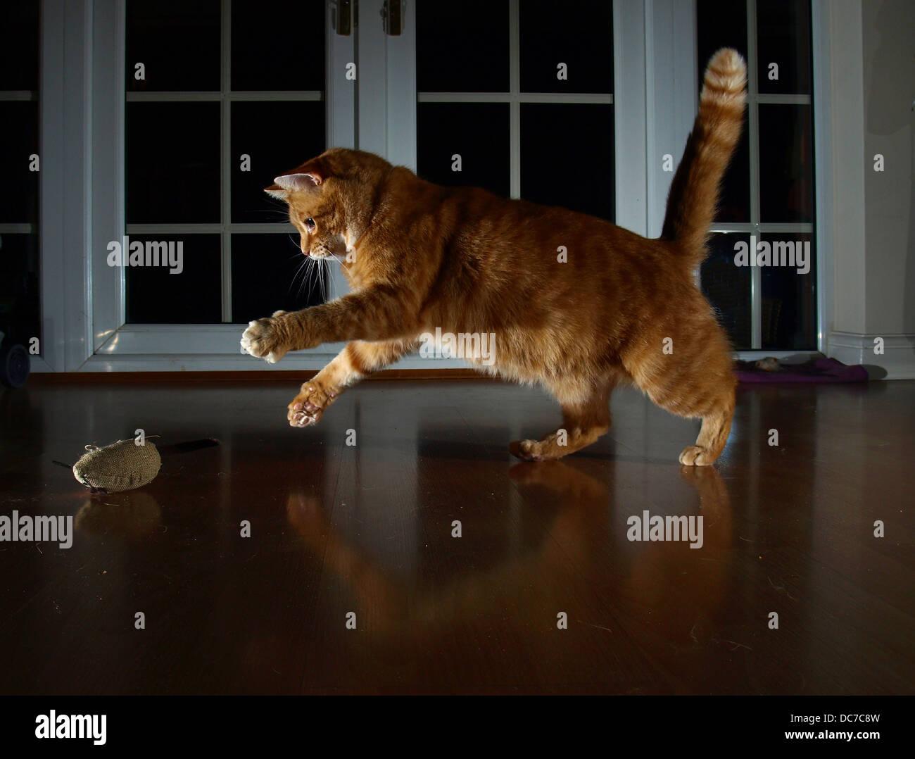 Gato juguetón Foto de stock
