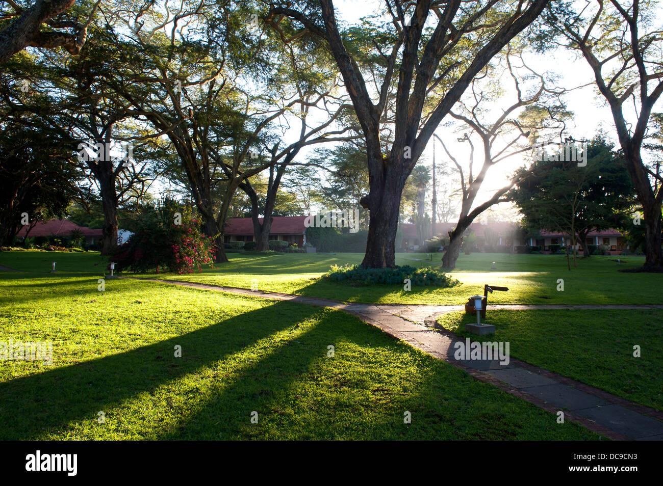 Hermoso parque con luz solar a través de un árbol de transmisión Foto de stock