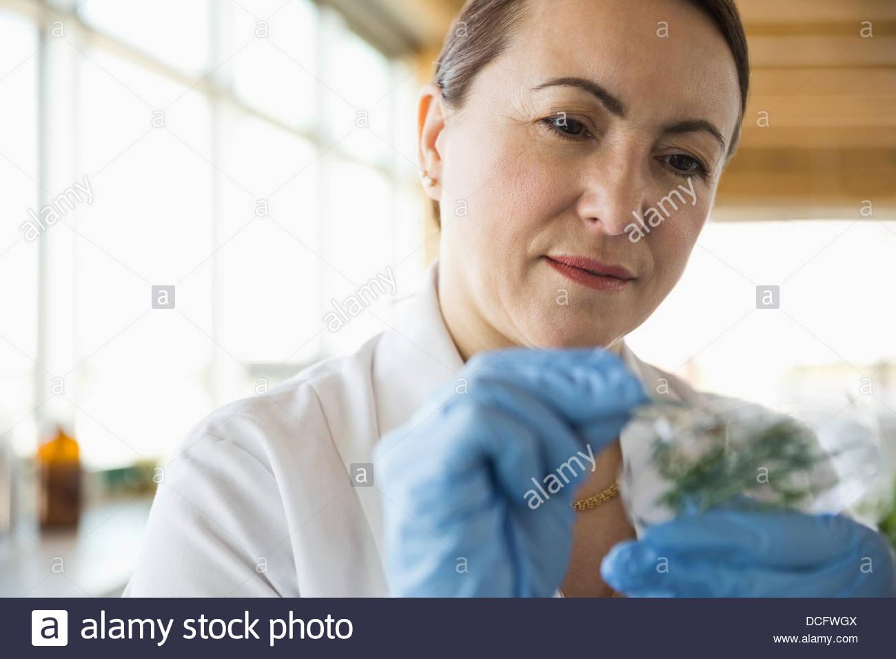 Mujeres trabajando en el laboratorio de botánica Foto de stock