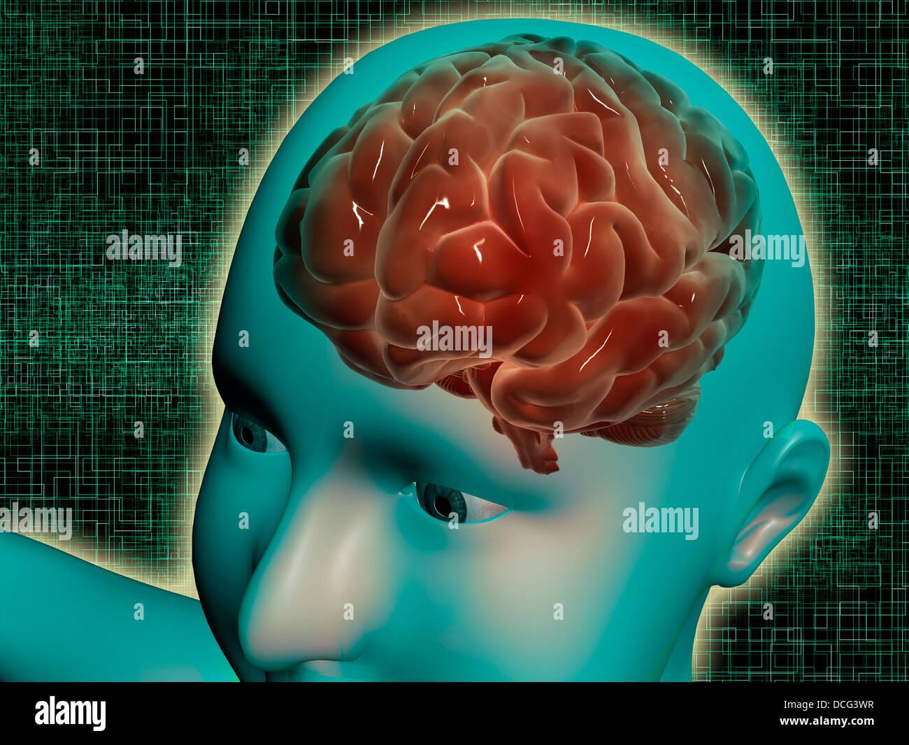 Imagen conceptual del cuerpo femenino con el cerebro, la vista lateral. Imagen De Stock