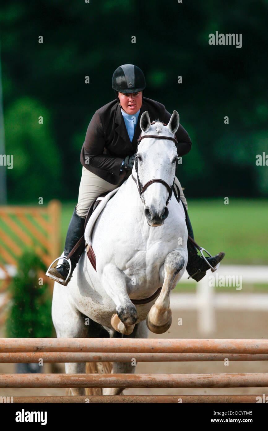 Un jinete y su caballo saltando una valla a un espectáculo de caballos. Imagen De Stock