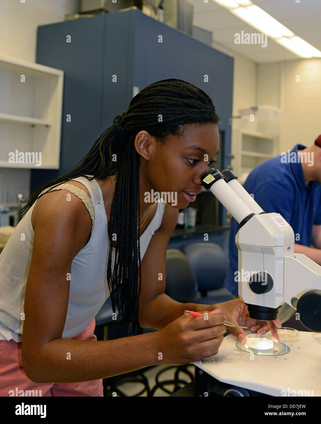 Laboratorio de Biología del Desarrollo en la Escuela de Verano de Yale. Estudiante de Cornell mira mutantes Imagen De Stock